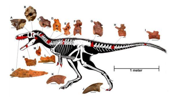 Gráfico muestra las características del nuevo dinosaurio. (Foto: AP)