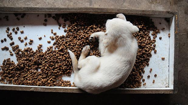 [Foto] ¿Qué alimentos pueden matar a tu mascota?
