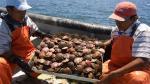 Envíos acuícolas caen y llegan a las 27.000 toneladas el 2015 - Noticias de eduardo amorrortu