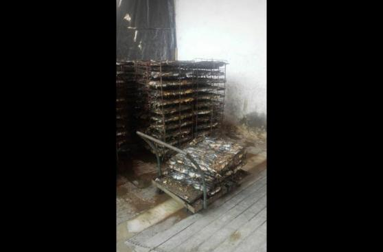Semana Santa: incautaron toneladas de pescado malogrado [FOTOS]