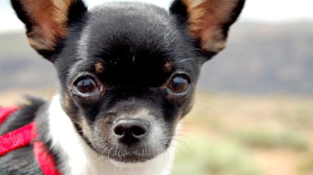 [Foto] Clase rápida para entender mejor a tu perro