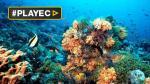 La Gran Barrera de Coral sufre la peor crisis de su historia - Noticias de james cook