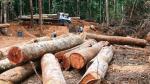 TC admitió demanda contra ley del 'paquetazo ambiental' - Noticias de acción de inconstitucionalidad