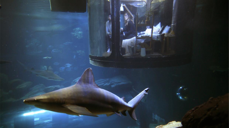 La idea del acuario es ayudar a entender mejor a los escualos. (Foto: Reuters)