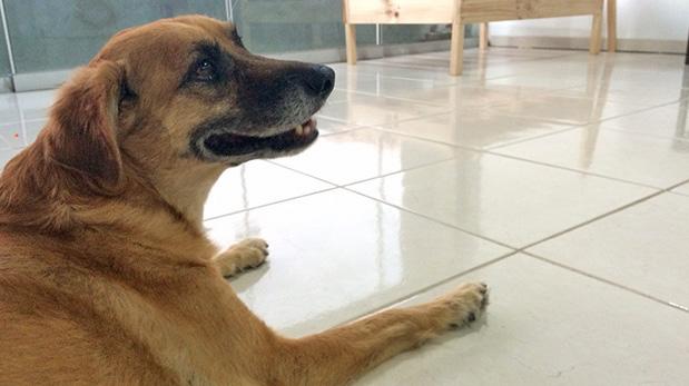 [Foto] Este perro pasó de la calle a la gloria