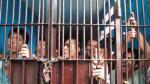 La sobrepoblación en las cárceles del Perú es de 132% - Noticias de jaén