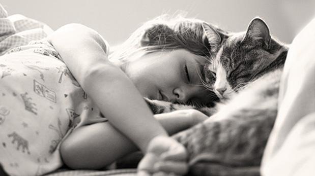 [Foto] La indiferencia de los gatos: ¿Me quiere o no me quiere?