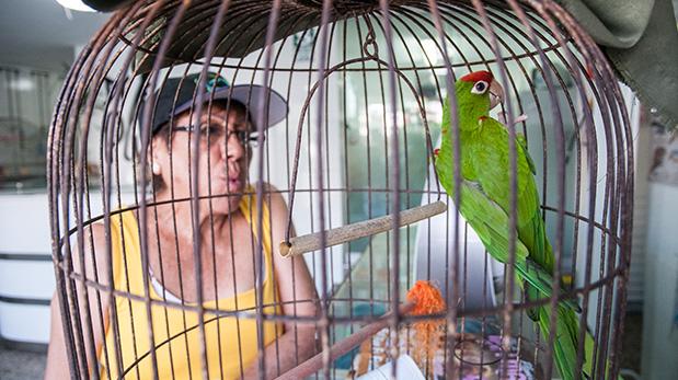 Mery Fernández, clienta de Dr. Plumas, observa a su loro Aurora.
