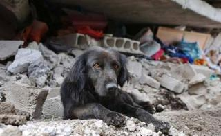 Ecuador: La historia del perro que no se movió de los escombros