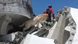 Perro rescatista murió luego de salvar varias vidas en Ecuador