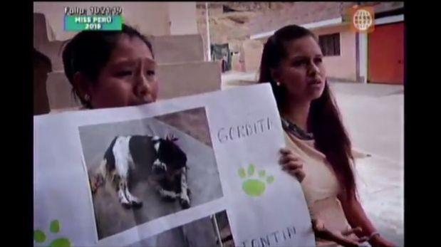 Suman 76 los perros que murieron envenenados en Cañete
