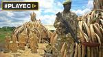 Kenia se moviliza para erradicar el comercio ilegal de marfil - Noticias de rinoceronte blanco