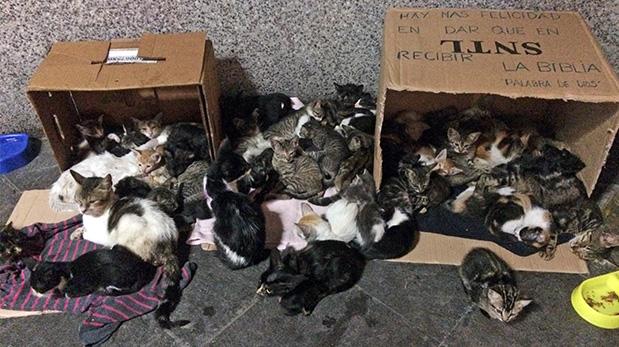 Uno de los rincones más conmovedores del parque es la guardería, la que alberga decenas de gatitos en estado vulnerable.