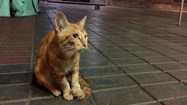 Estos gatos están expuestos a los cambios bruscos del clima, a la inestabilidad de los voluntarios y a todo tipo de abusos.