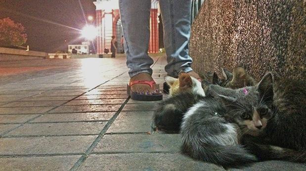 Esta imagen muestra a uno de los gatitos que fueron marcados con esmalte antes de ser abandonado.