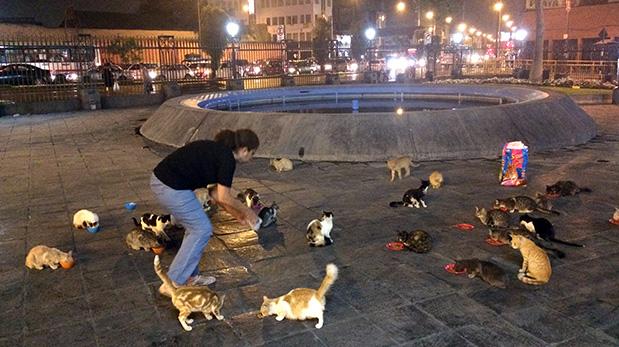 Cada noche se utiliza al menos una bolsa grande de alimento balanceado para alimentar a todos los gatos.