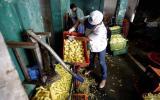 Por insalubres cierran locales que repartían papas a pollerías