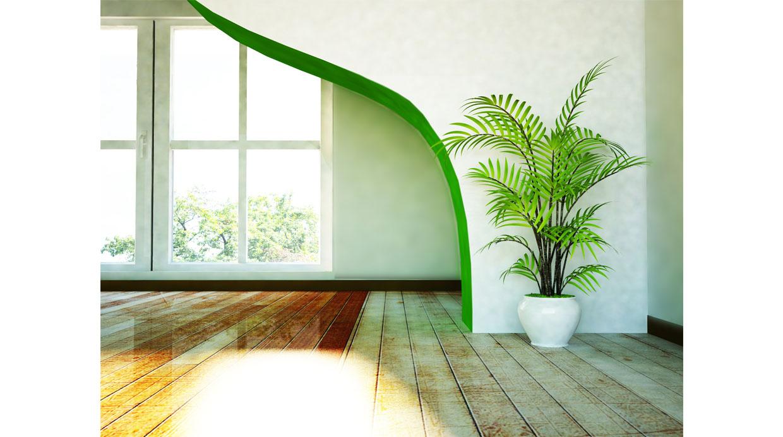 Conoce los beneficios de tener plantas en el hogar casa for Plantas en el hogar