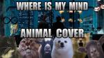 Un excéntrico cover de The Pixies hecho por varios animales - Noticias de kurt cobain
