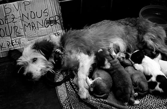 Las mascotas de las personas sin casa en la ciudad de París