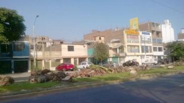 Los Olivos responsabiliza a Lima por tala en Av. Las Palmeras