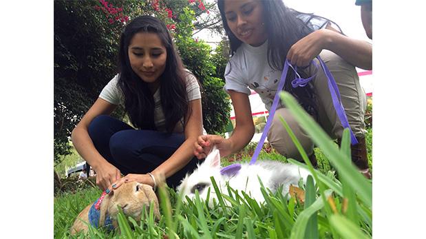[Foto] Conoce a esta brigada pro conejos