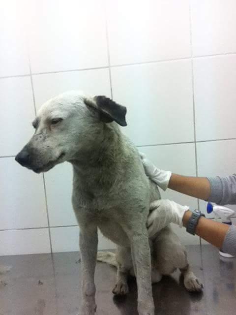 Dubi en octubre del 2014, tras ser rescatado.