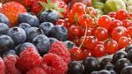 Exportación de arándanos cerraría este año en US$200 millones - Noticias de descentralizado 2011
