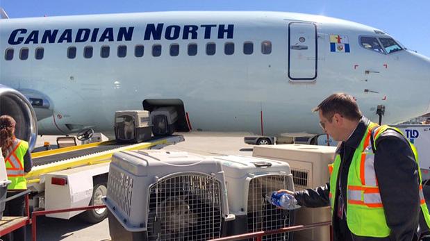 Luego de trasladar a los evacuados, un piloto visitó a algunos perros que viajaron en bodega y les ofreció agua para beber.