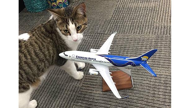 El gato Meow Meow pasó unos días más con los trabajadores de la aerolínea pues su dueña justo dio a luz tras ser trasladada.