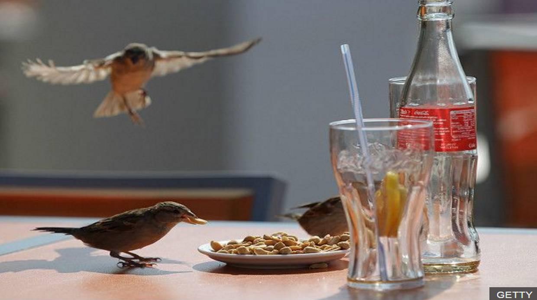 La Coca Cola le lleva 121 años de ventaja al iPhone. (Foto: BBC Mundo)