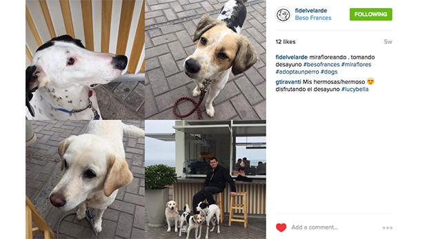 [Foto] Aquí tus mascotas son más que bienvenidas