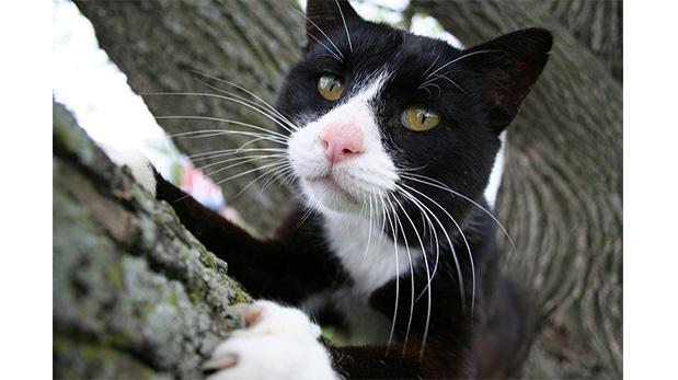 [Foto] Los gatos y sus garras ¿Por qué no extraerlas?