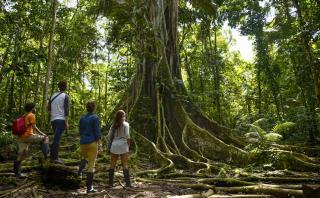Disfruta de lo mejor de Iquitos con esta ruta de 3 días