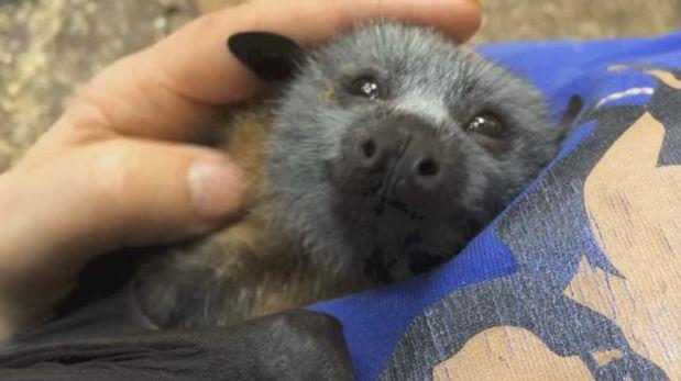 La tierna reacción de un murciélago al ser acariciado [VIDEO]
