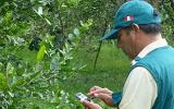 Senasa declara en alerta fitosanitaria la citricultura local