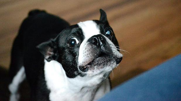 [Foto] ¿Cuándo las mascotas necesitan psicólogo?