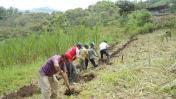 Piura perdió el 31% de bosques por la agricultura migratoria
