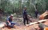 Dos hombres fueron detenidos por talar árboles ilegalmente