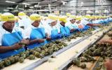 Agroexportadora Danper venderá por US$150 millones este año
