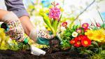 Nueve claves indispensables para cuidar tu jardín - Noticias de radiación solar
