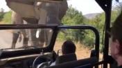 Arnold Schwarzenegger, perseguido por un elefante en Sudáfrica