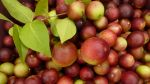 Día Mundial de la Salud: Alimentos para potenciar tus defensas - Noticias de oscar roy