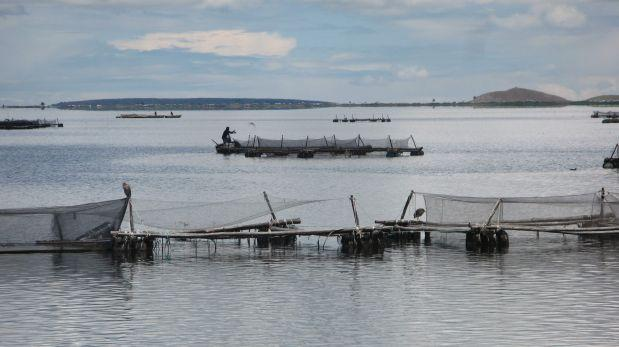 Puno s bita muerte de truchas en laguna preocupa a for Crianza de truchas en lagunas