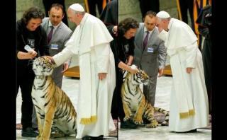 El papa acaricia a un tigre y se lleva gran susto [VIDEO]
