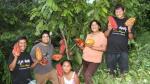 Puno: sembrarán cacao en áreas erradicadas de cultivos de coca - Noticias de nuevo sol