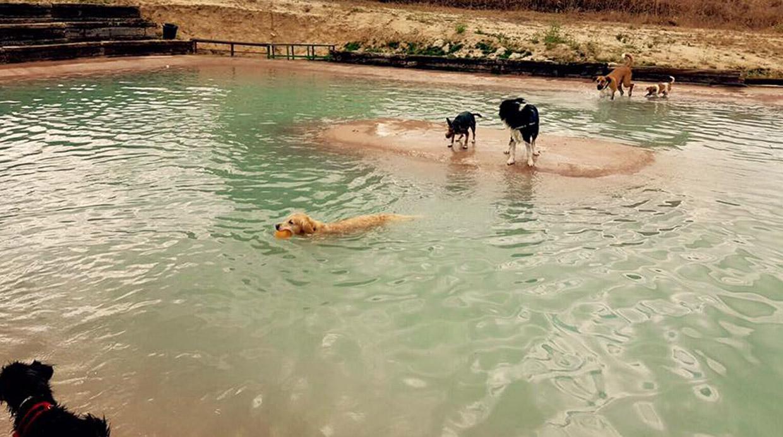 En madrid abren la primera piscina para perros noticias for Piscina perros