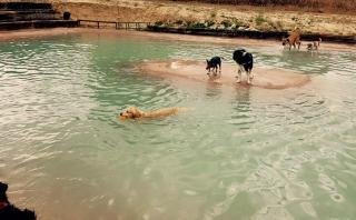 Abren una piscina para perros en Madrid