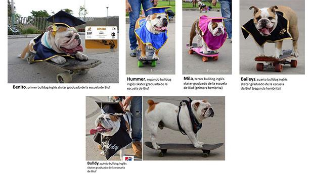 Los 5 orgullos de la Escuelita de Perrunos Skaters.