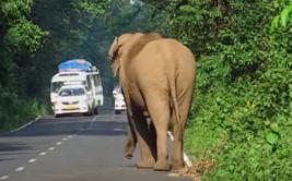 Elefante detuvo el tránsito debido a tierna razón [VIDEO]